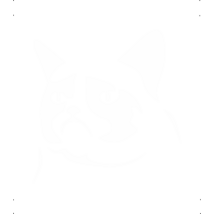 Grumpy cat autó matrica fehér #426