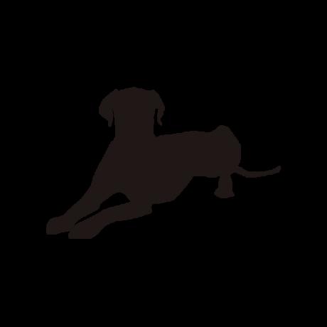 Dalmata kutya autó matrica fehér #167