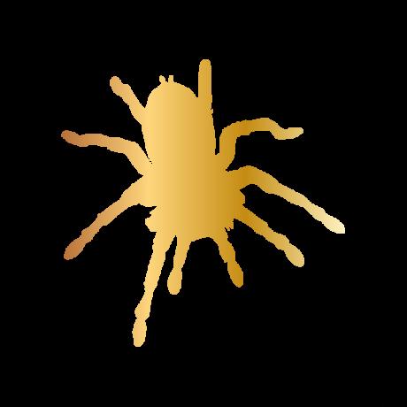 Madár pók autó matrica arany #573