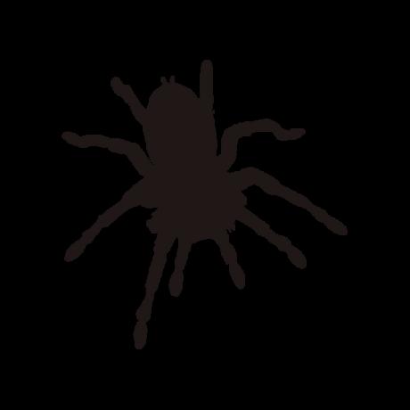 Madár pók autó matrica fekete #570