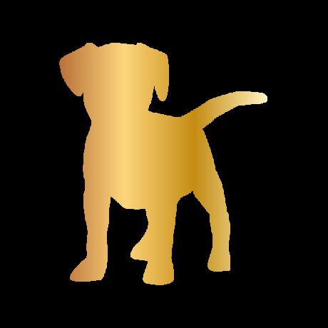 Beagle kutya autó matrica arany #179