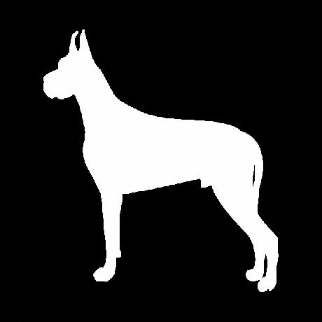 Dobermann kutya autó matrica fehér #182
