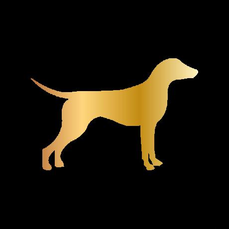 Német Pincser kutya autó matrica arany #199