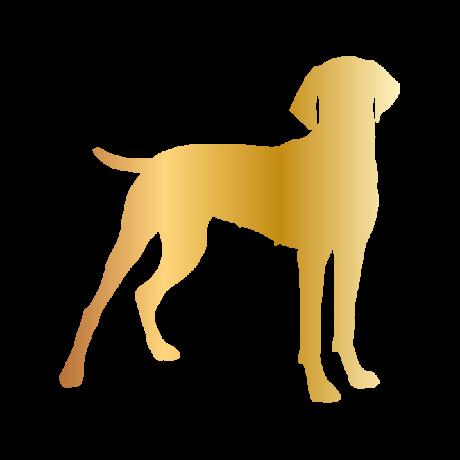 Vizsla kutya autó matrica arany #204