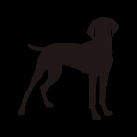 Vizsla kutya autó matrica fekete #201