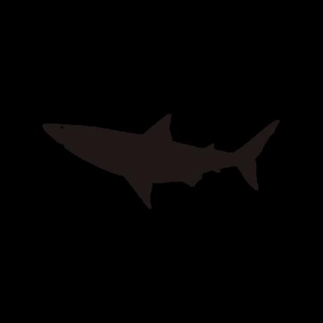 Cápa autó matrica fekete #585